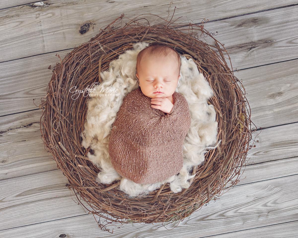 newborn bird nest photo prop